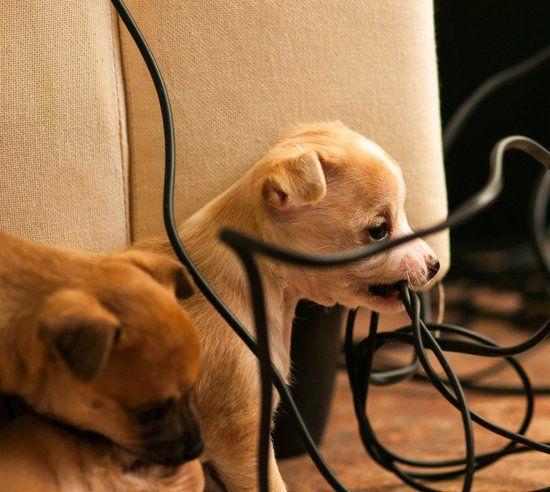 Wie Man Einen Hund Vom Kauen Abhalt Hunde Haustiere Welpen