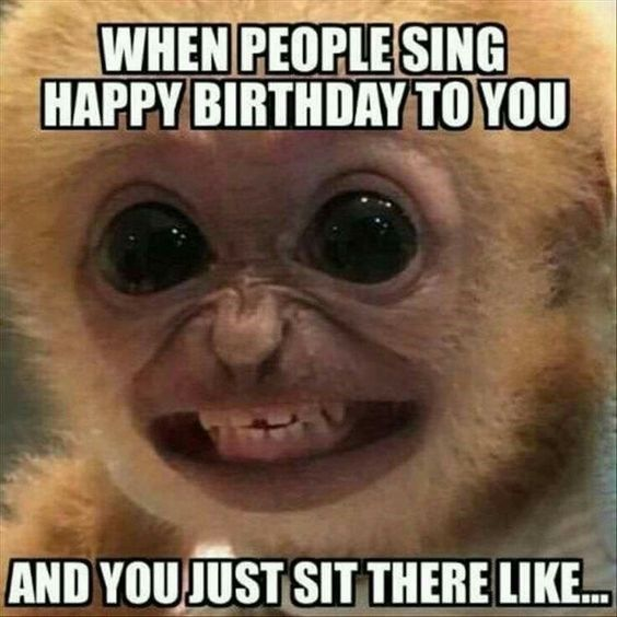 15 Hilarious Monkey Memes To Brighten Your Day Monkey Meme About Being Sung Happy Birthday To With Pic Of Monkey Smiling Awkwardly Blog Kanavice