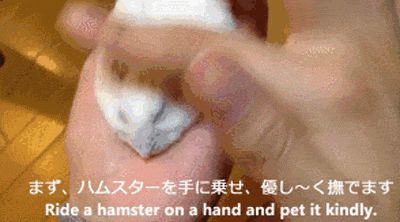 For all you hamster owners out there... | 22 Awesomely Useless Party Tricks You Can Learn Right Now