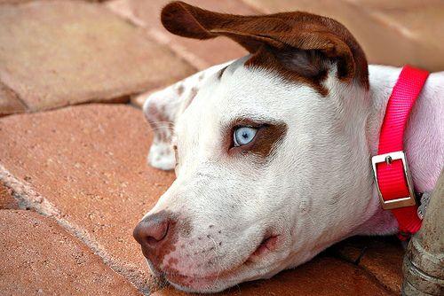 Dog Daze - http://www.1pic4u.com/blog/2014/09/22/dog-daze-2/