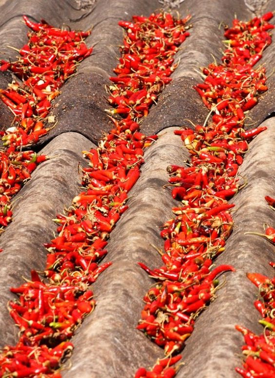 India, peppers on the roof: