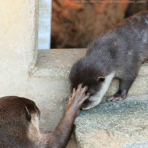 33 Times Otters Saved The World Just By Being Adorable Otters Cute Otters Cute Animals