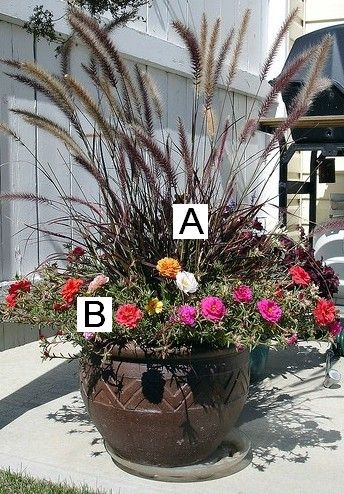 This website gives you photos and suggestions for planters! I could follow this! A=Fountain Grass B=Portulaca (Moss Rose)