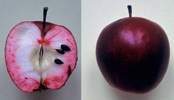 """Bei vielen traditionellen Apfelsorten wurde der Name vom Volksmund bestimmt, wie hier beim """"Blutapfel""""."""