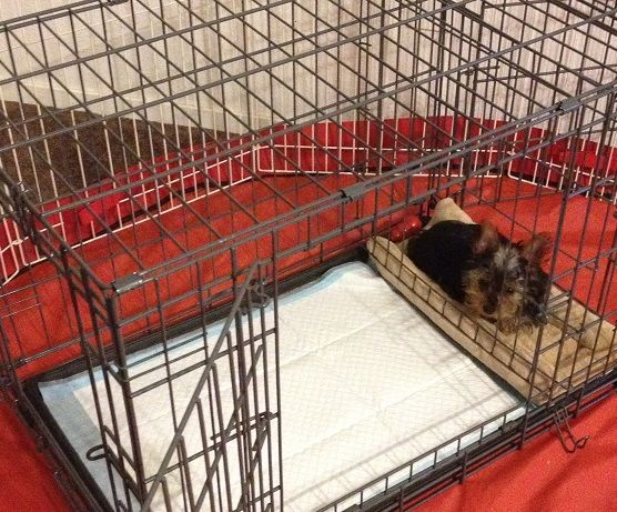 how to potty train your puppy with a kennel