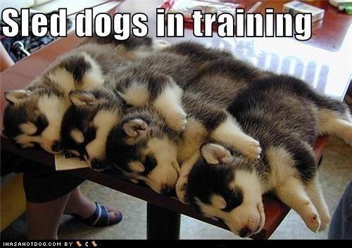 Funny Dog Photos, Even Funnier Captions