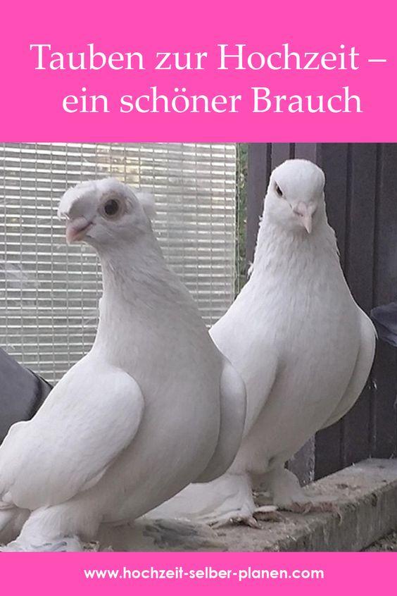 Tauben Zur Hochzeit Ein Schoner Brauch Tauben Hochzeit Hochzeit Hochzeitsfeier