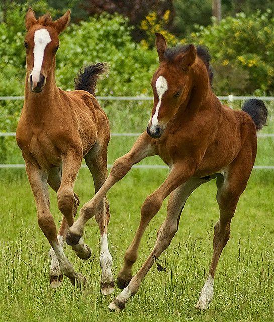 Foals:
