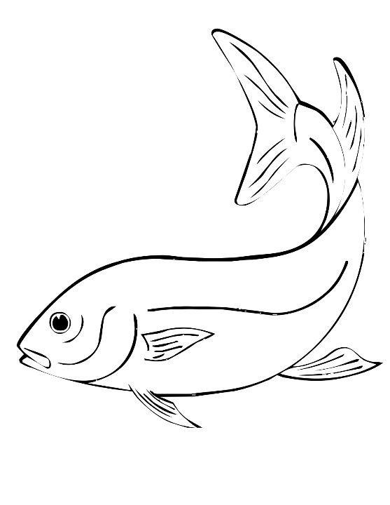 fish line drawing   fish line drawing   art /drawing ideas, Reel Combo