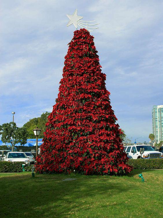 En Navidad una de las cosas más bellas para  decorar el pie de árbol son las flores de Nochebuena y son tan lindas que quisiéramos conservarlas todo el año y en  éste post te decimos cómo lograrlo.   Visita nuestro catálogo de hogar  http://www.linio.com.mx/hogar/