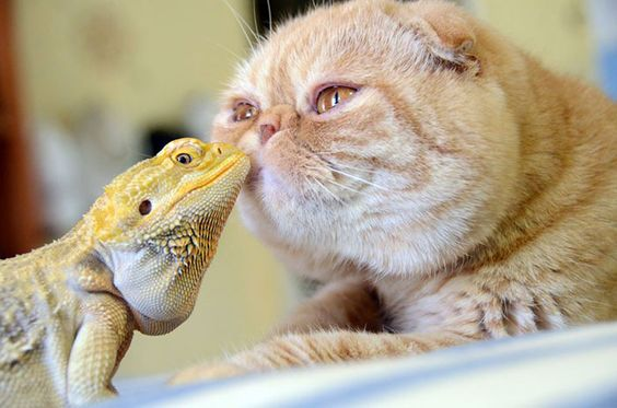 Ten Adorable and Unique Animal Friendships