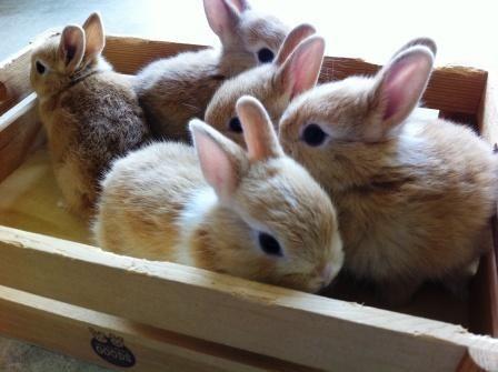 Makes me want a bunny.. So Cute!