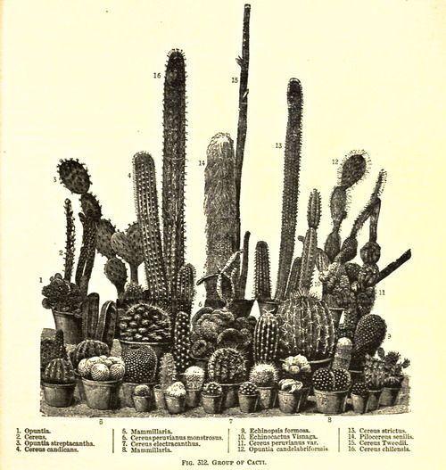 4716be9bb8969101ffda774142fcc99b - The New Rhs Dictionary Of Gardening