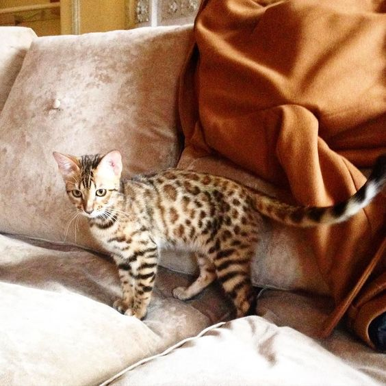 Le petit chat  by louisepando