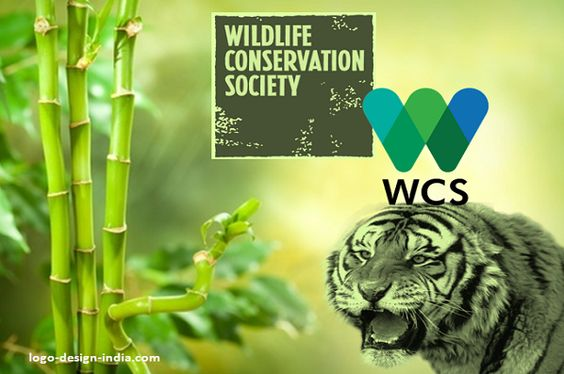 Image result for wildlife conservation society