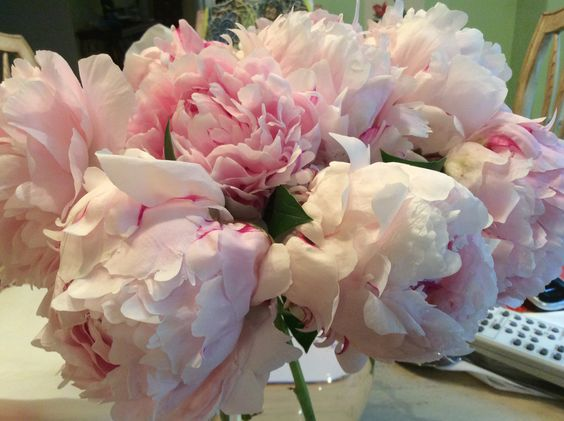 The peonies from my garden 2014.