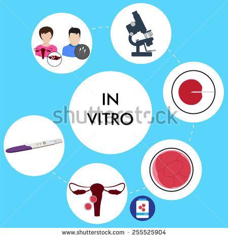 vector illustration of in vitro fertilization process - stock vector