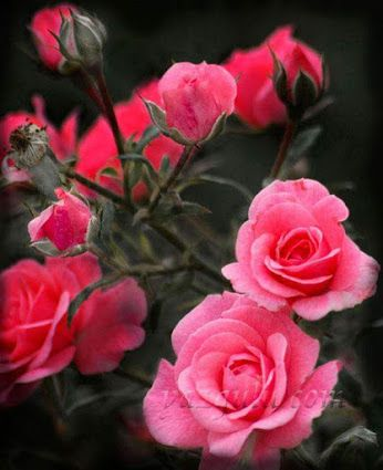 Flores cautivadoras - Comunidade - Google+
