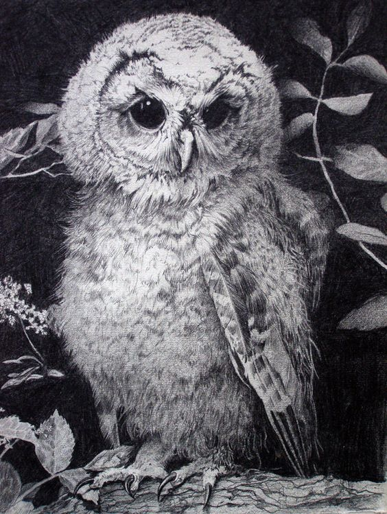 10  Clever Owl Drawings for Inspiration, http://hative.com/clever-owl-drawings/,