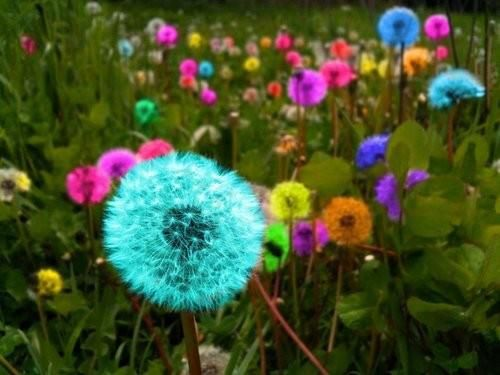 Make a wish! I wish that dandelions really were these colors!