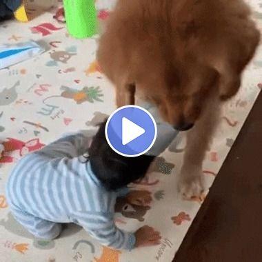 Cachorro ajudando a criança a tirar sua toca