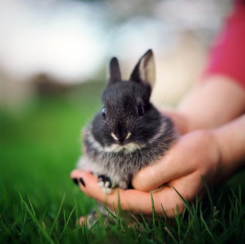 So Cute Bunny :) | lovely creatures | Pinterest | So cute, Cute ...