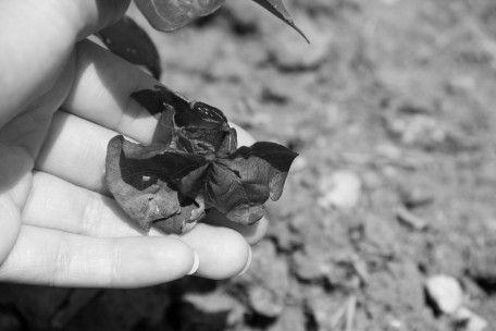 Alabama Chanin: Organic Cotton - Drought