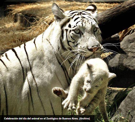 Por fin el Zoologico de Buenos Aires será cerrado por mal tratamiento a los animales y se creará un ecoparque  http://www.clarin.com/ciudades/Sacaran-animales-Zoo-transformaran-Ecoparque_0_1600639940.html