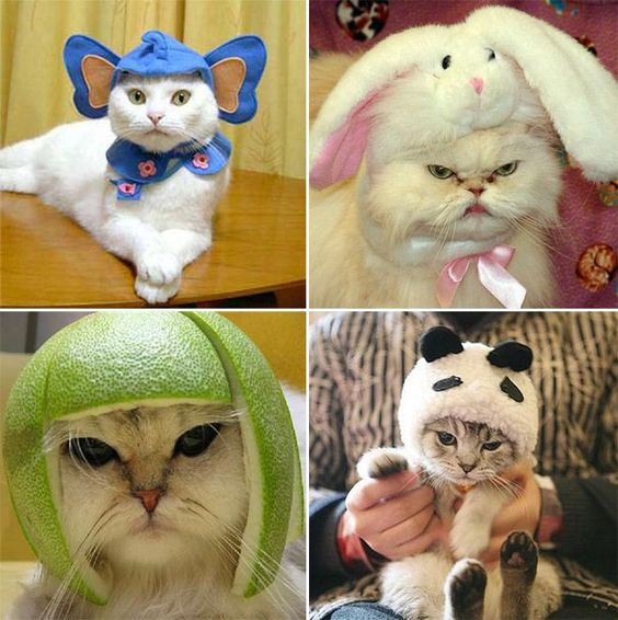 """I'm Just from London Town"" - 20 Photos of Cats Wearing Hats to Brighten Your Day - Nster News"