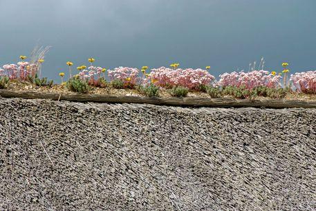 'Flowers on roof ridge - Blumen auf Dachfirst' von Ralf Rosendahl bei artflakes.com als Poster oder Kunstdruck $16.63
