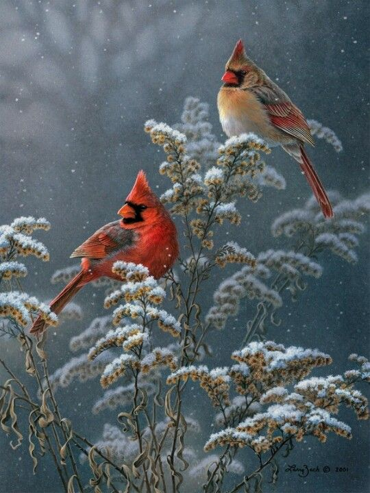 Northern cardinal art walls and snow on pinterest - Pictures of cardinals in snow ...