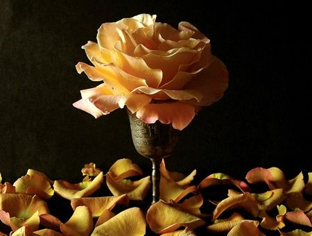 Single Rose - Photography Wallpaper ID 648674 - Desktop Nexus Abstract