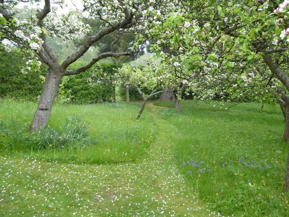Mown orchard path