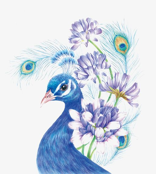 Blue Peacock In 2020 Bird Drawings Color Pencil Art Peacock