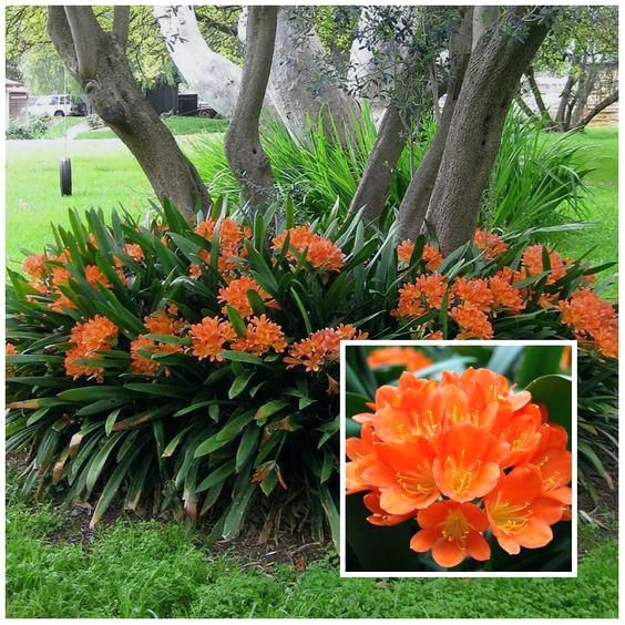 Image Result For Florida Zone 9 Shade Plants Plants Shade