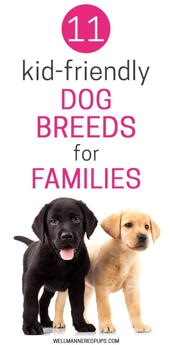 Best Dog Breeds With Pictures