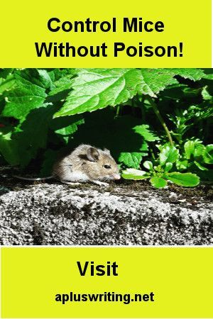 4740eb683a83bcbab695634d68470fba - How To Get Rid Of Voles Without Killing Them