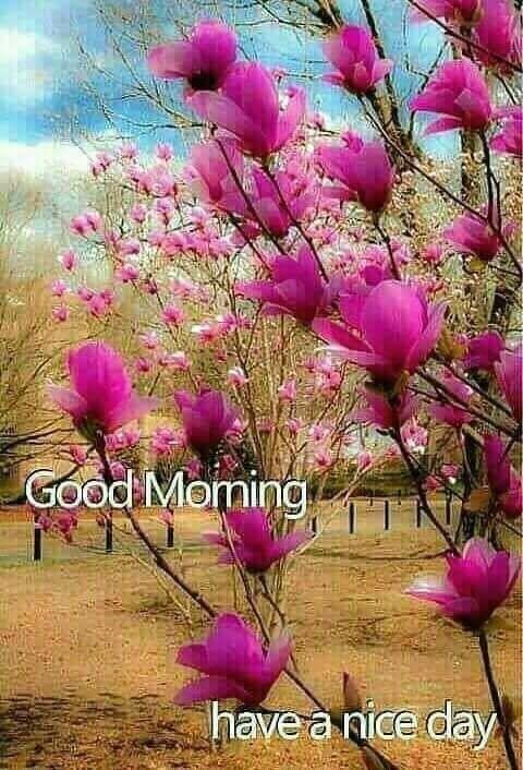 Pin Von Patricia Hansen Auf Good Morning Quotes Blumen Anbauen Schone Blumen Blumen Pflanzen