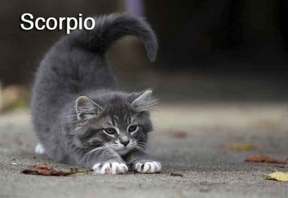 The 12 Cats Of The Zodiac