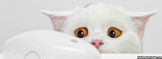 Gato mirando raton
