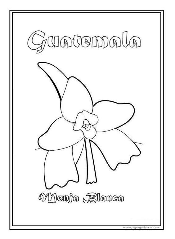 National Symbol: Monja Blanca (White Nun Flower) Coloring Page #IndependenceDay