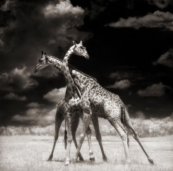 #photography | Stunning Wild Africa Photos by Nick Brandt #6