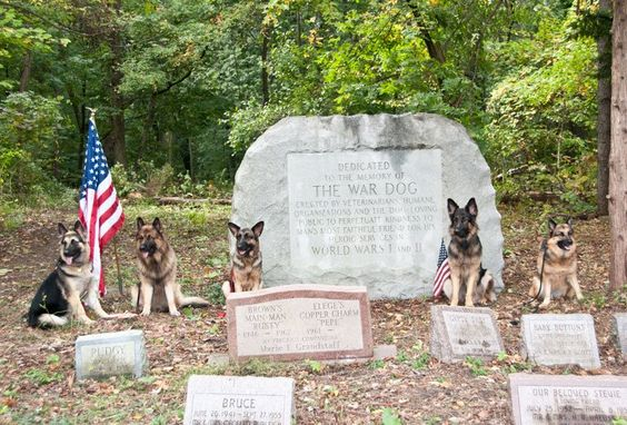 March 13, 1942 is the official birthday of the United States K9 Corps. They served to save, and they deserve to be remembered.    Photo caption: In a forgotten plot called Happy Hunting Grounds in South Lyon, MI, there is an old pet cemetery that also is home to fallen canine veterans. We honor not only those in the K9 Corps, but also Police K9s, Customs K9s, Border Patrol K9s, Secret Service K9s, Airport Police K9s, F.B.I. K9s, and other working dogs that protect us every day.