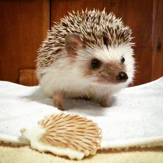 ハリネズミブローチ こちらも友達からの誕生日プレゼント ブローチってどこに着けたらいいのですかね センスがないのでイマイチわからん #ハリネズミ#hedgehog#ビフ by sr_umm