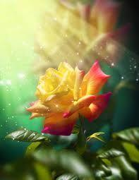 flores mas bonitas del Mundo - Búsqueda de Google