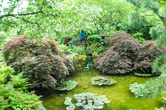 A shimmering green pond at the VIctoria, B.D. gardens.