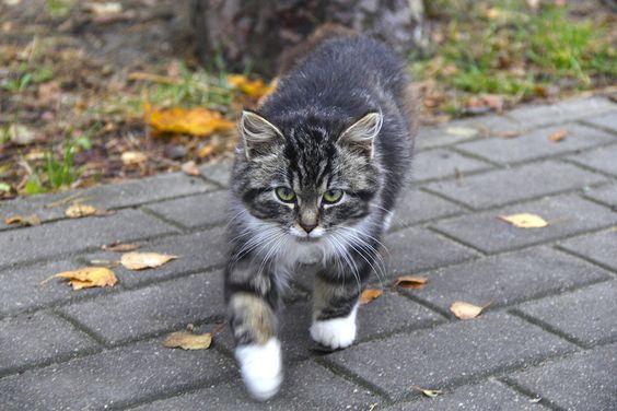 Котик из курортного городка Пионерский. Фото: Evgenia Shveda