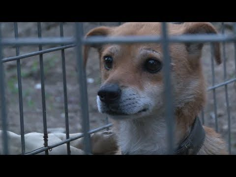 Dog Waits In The Exact Same Place Every Night Animal In Crisis Ep2 Youtube Dog Waiting Animals Beautiful Dogs