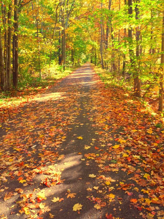 Fallen Leaves by Christy Miritello on 500px