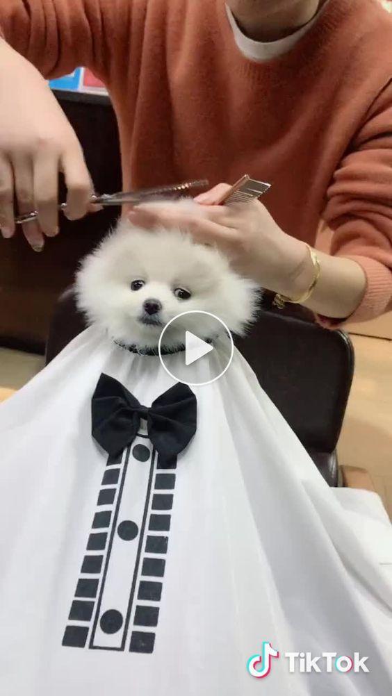 Levei meu cão no salão de beleza
